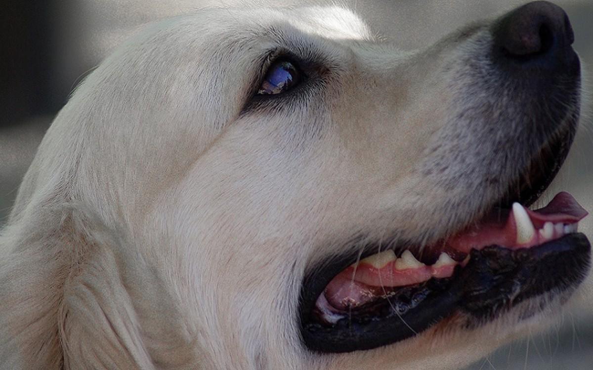 Pyometra in Female Dogs