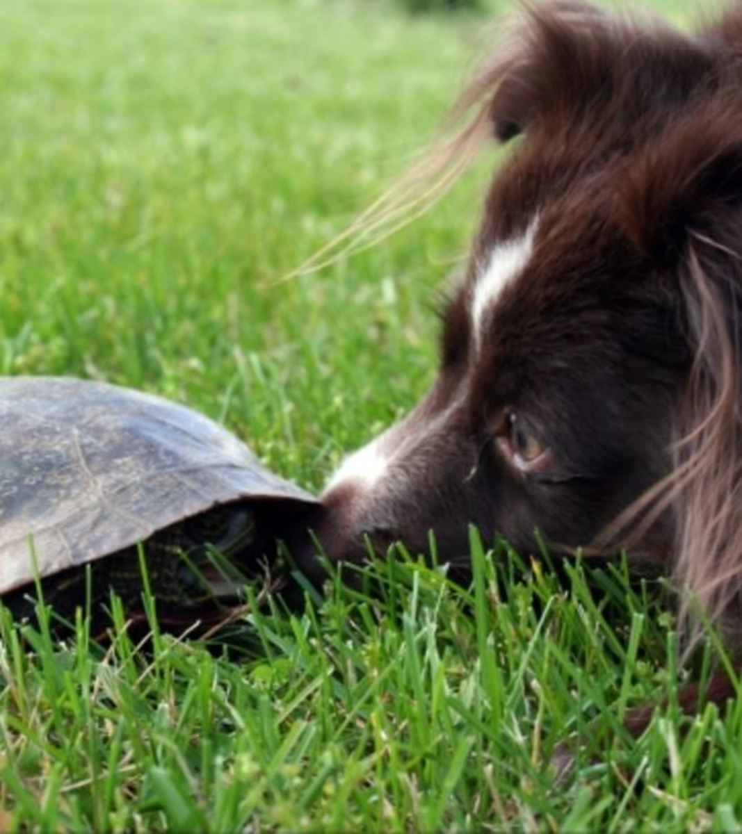 dog turtle