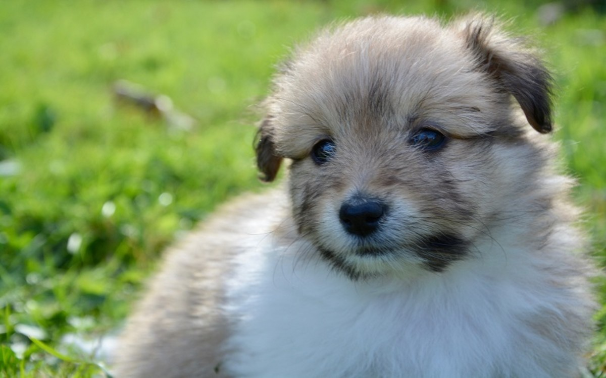 Dog at Risk of Developing Parvo