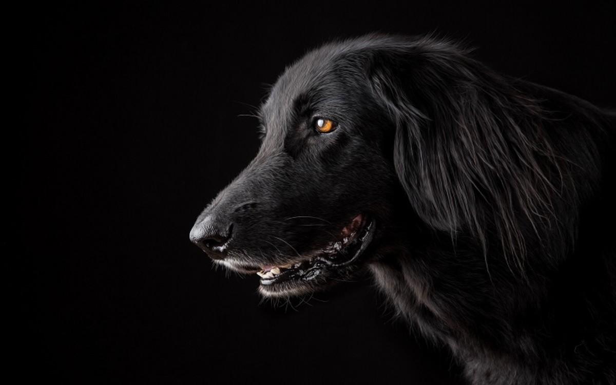 Dog Vomiting and Dog Regurgitation
