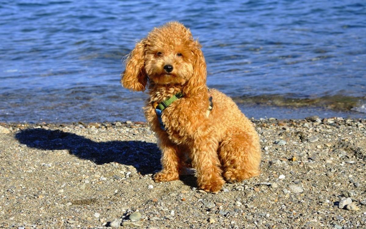 Benadryl for Dog Allergies