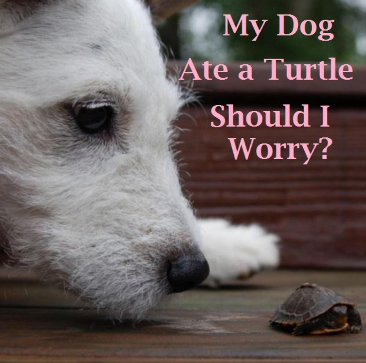 dog ate turtle