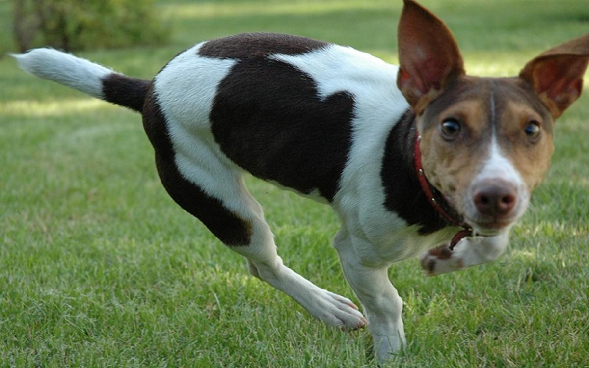 Vistaril, Atarax, Hydroxyzine for Dog Allergies
