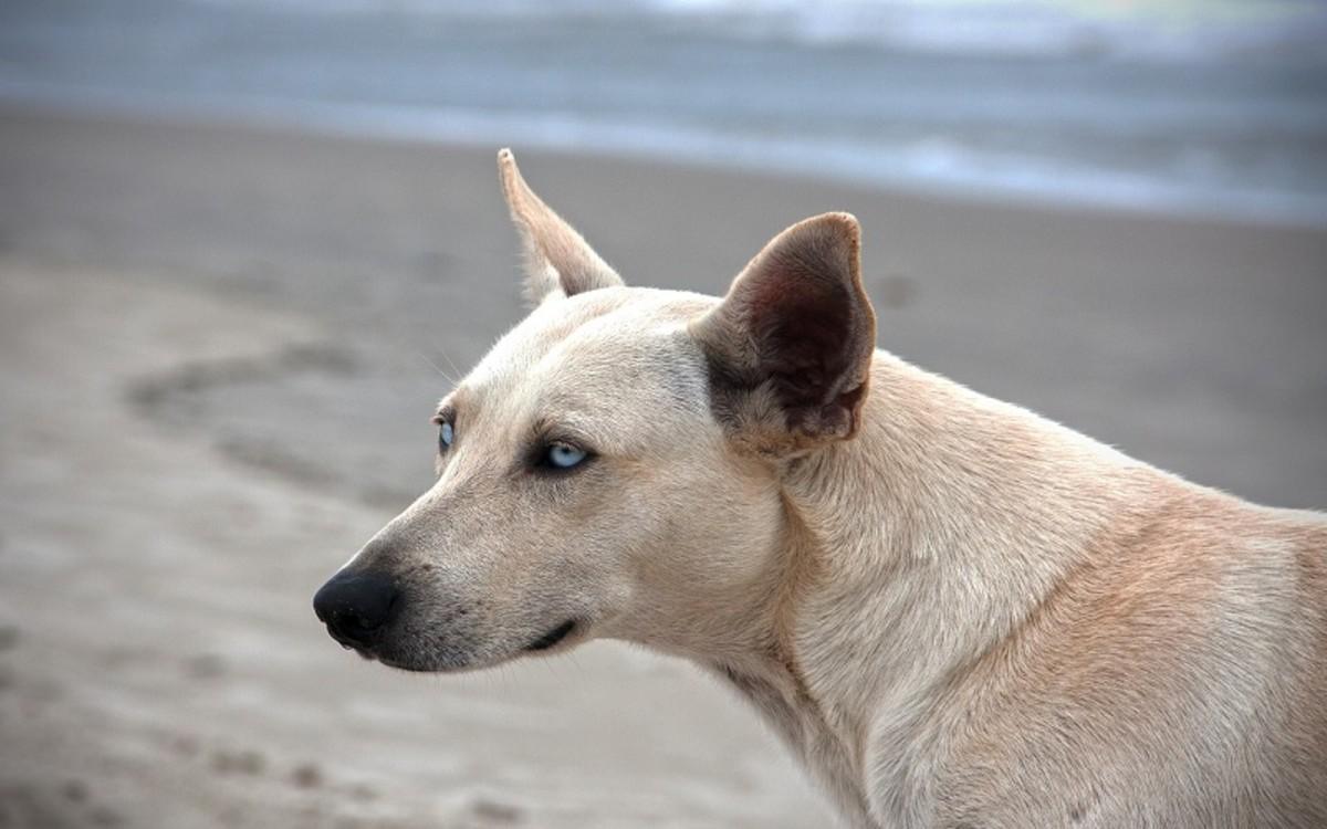 Interdigital Pyoderma in Dogs