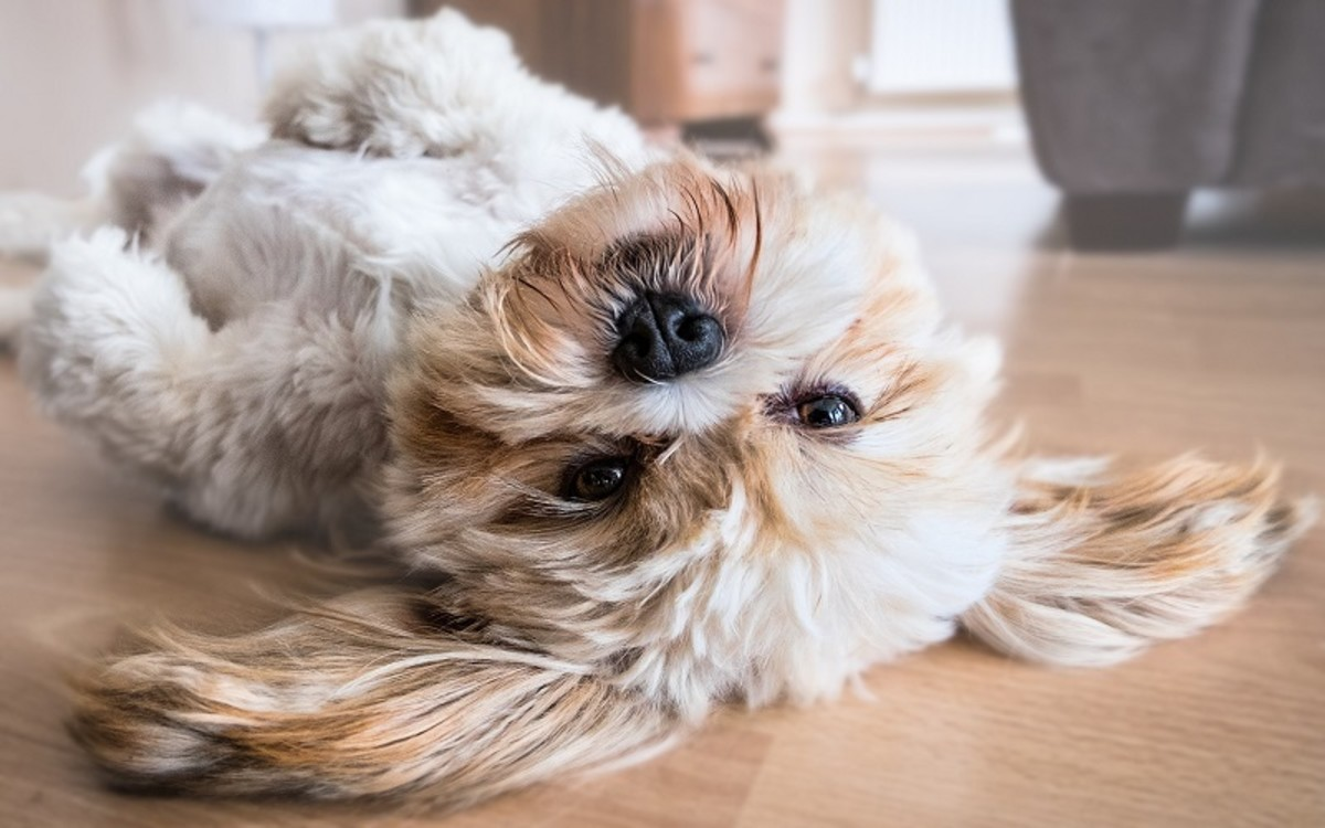 Causes of Black Skin on a Dog's Belly