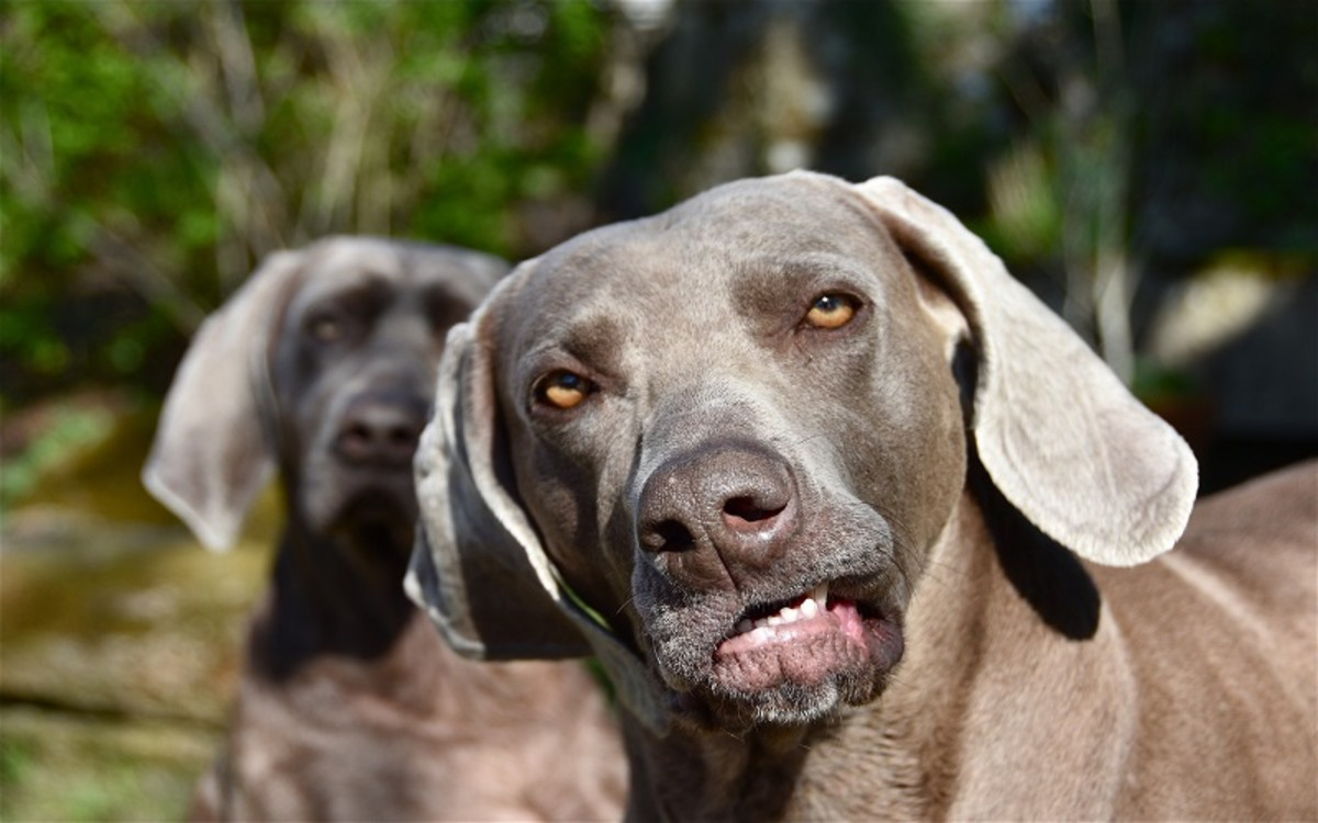 Dog's Teeth Fall Out When Old