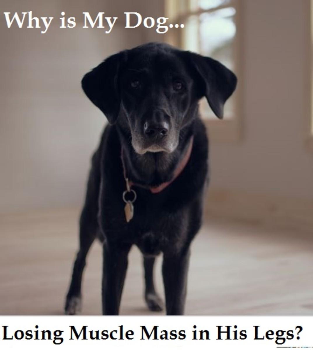 dog muscle mass