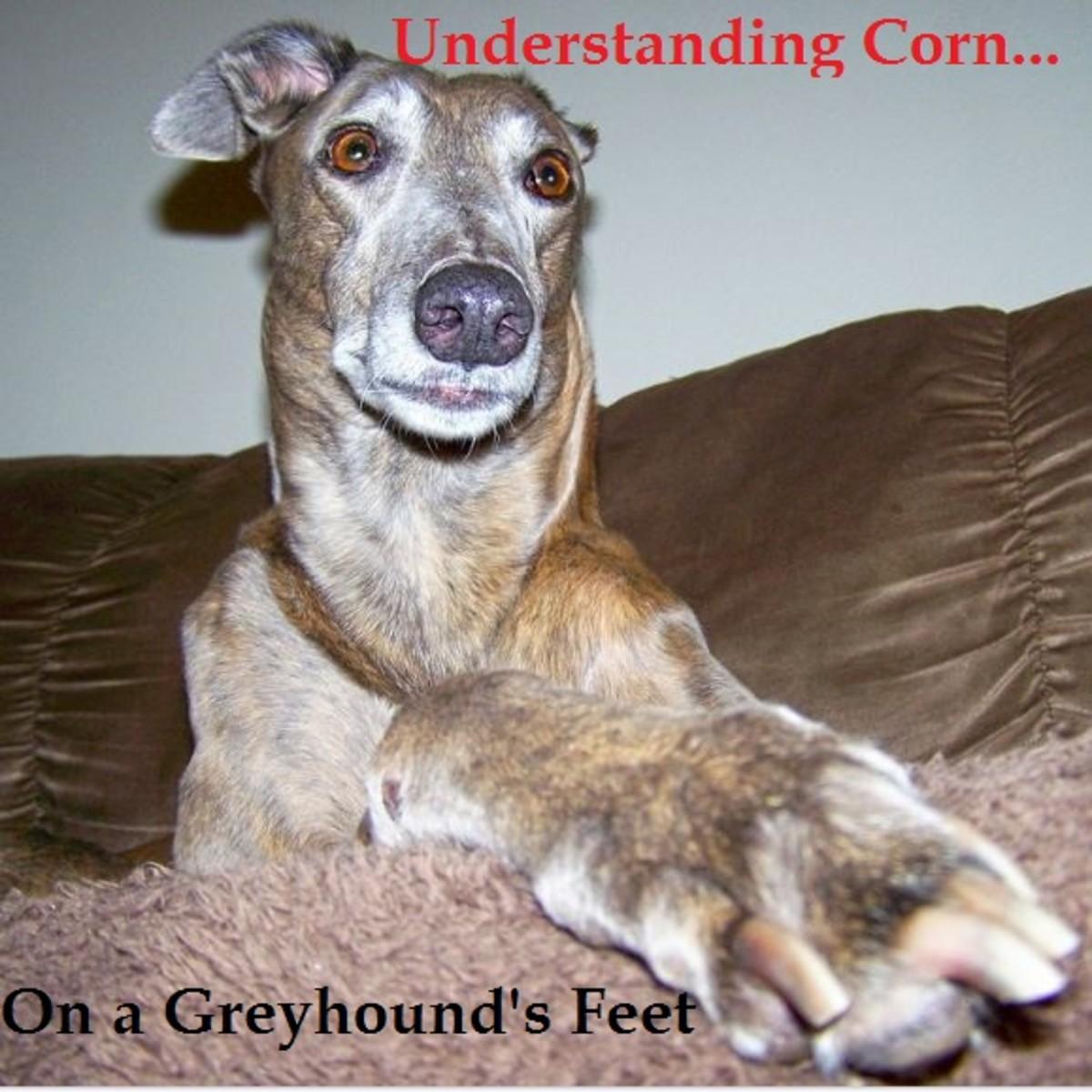 corn greyhound feet