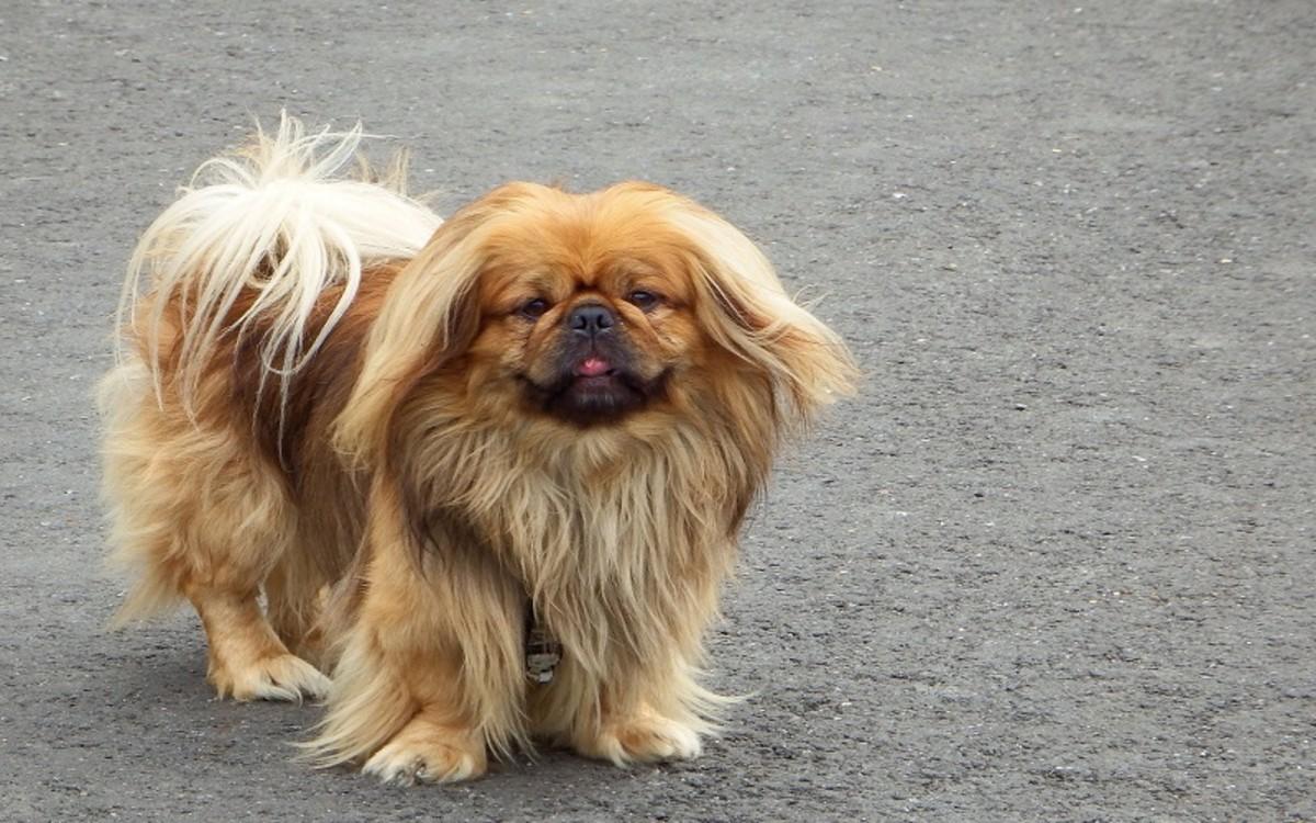Dog Wheezing Sound