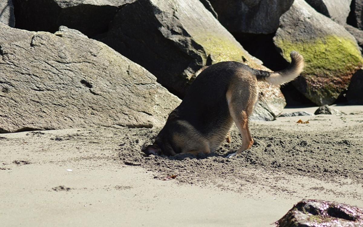 Dog Ate a Dead Rat