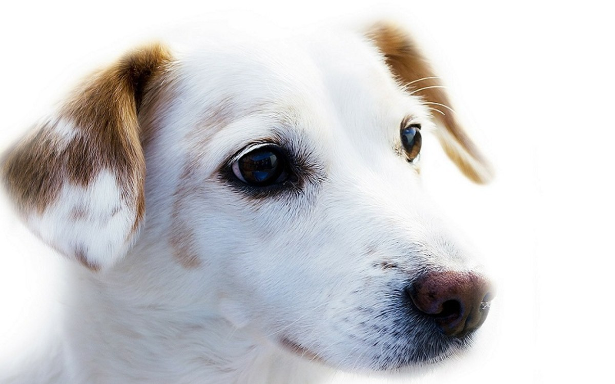 What Causes High Levels of Sodium in My Dog's Blood?