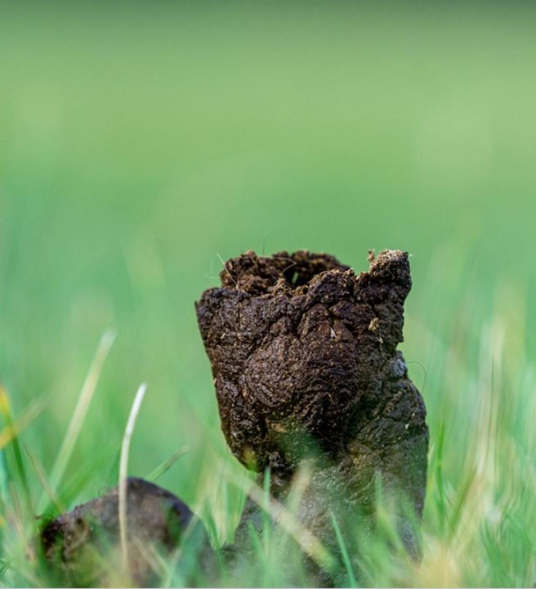 Stercobilin gives your dog's poop its usual chocolate-like, brownish color.