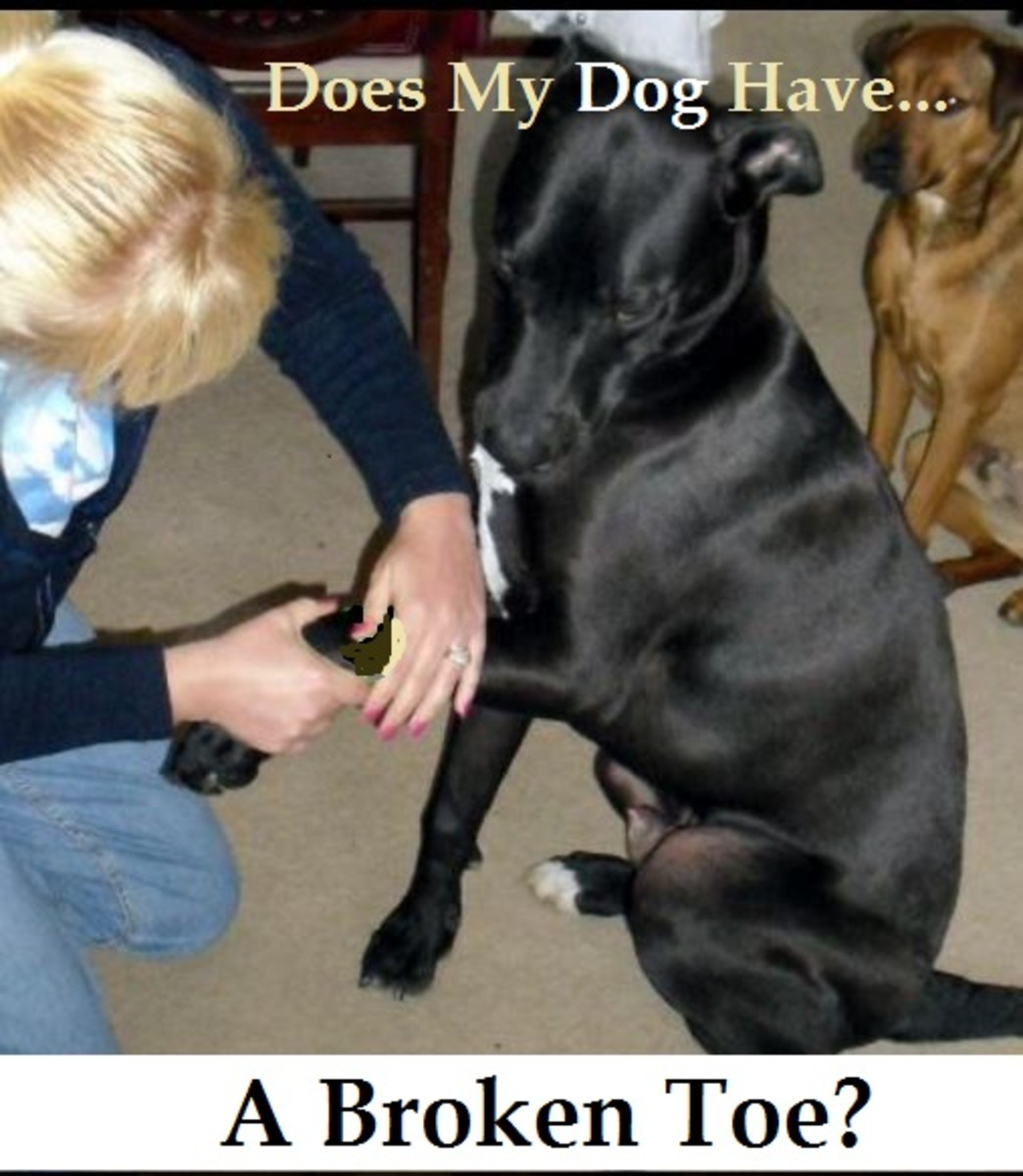 Dog Snake Bite