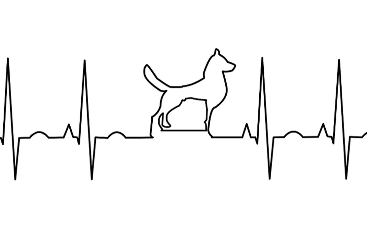 Pimobendan for Dogs
