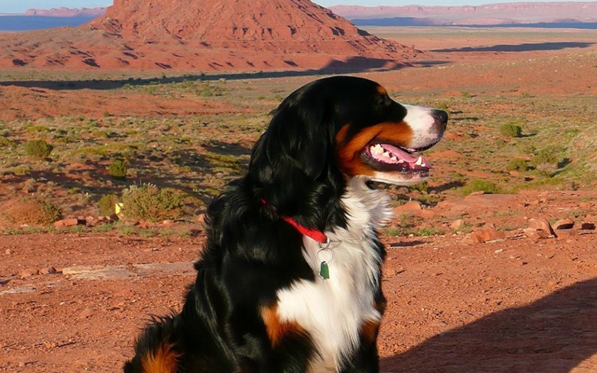 Fluconazole for Dogs
