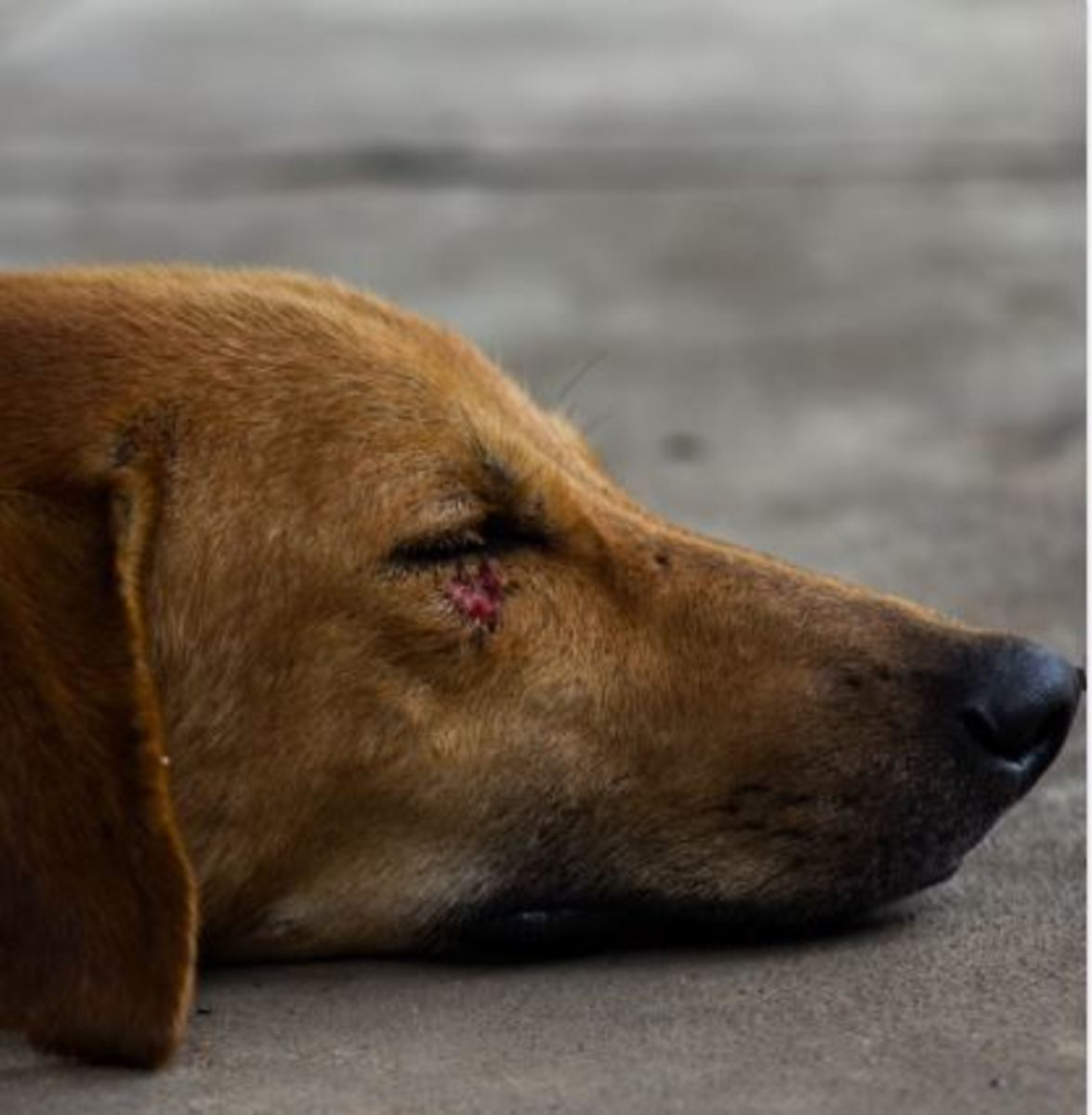 dog bite wound