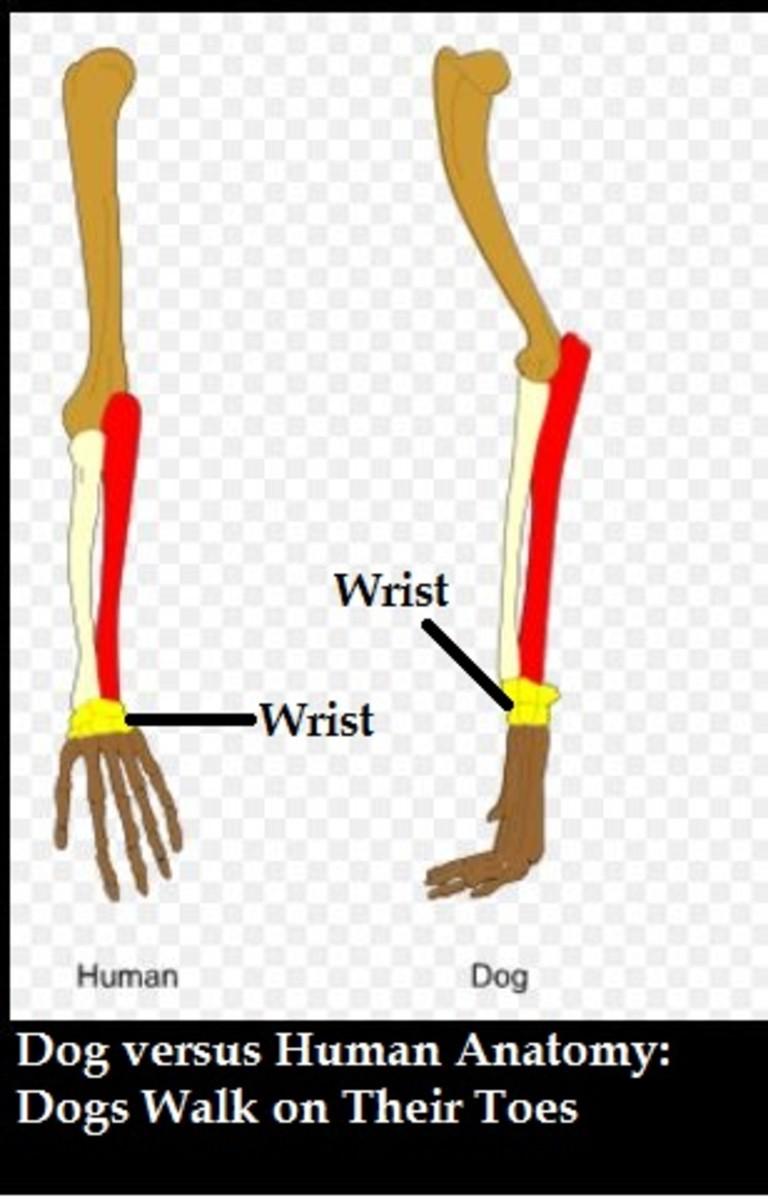 dog human toes