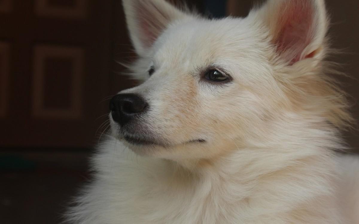 Bone Cancer of the Skull in Dogs