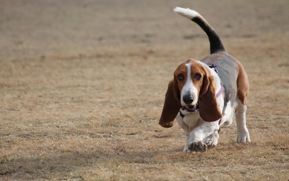 My Dog Walking Sideways