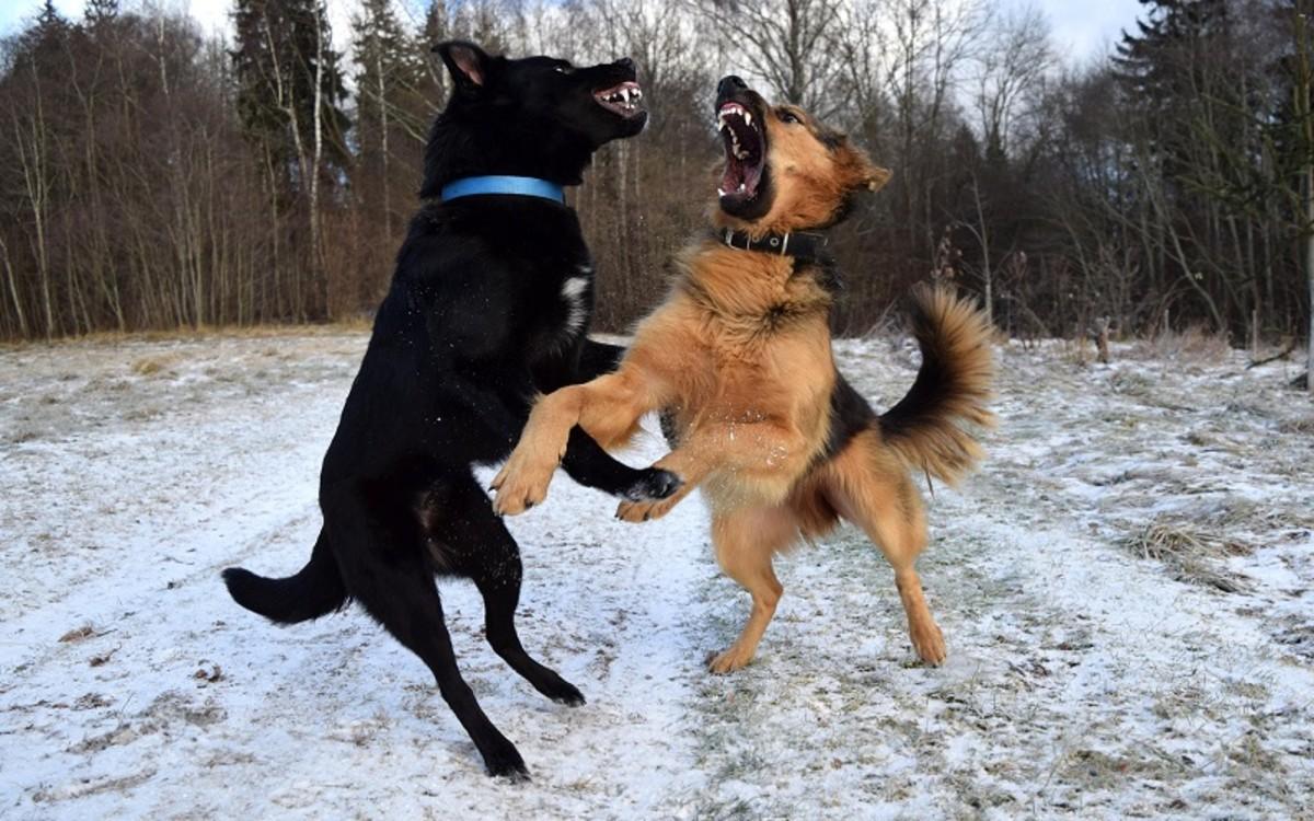 Dog Bite Puncture Wound