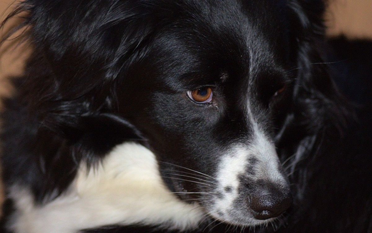 What's Going on With a Dog in Pain When Eating?
