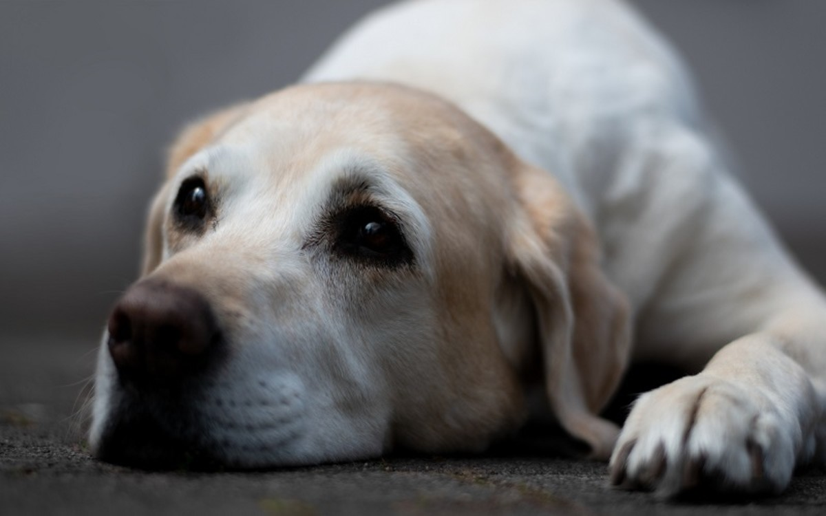 Delayed Gastric Emptying in Dogs