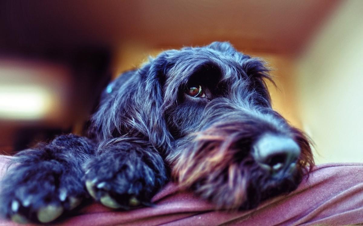 Dog Has Pencil-Thin Poop