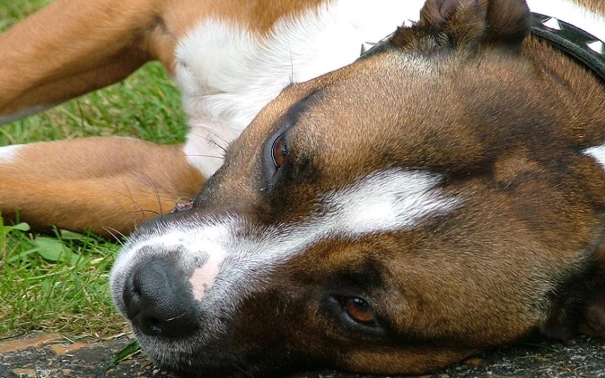 Hair Loss Around Dog's Eyes