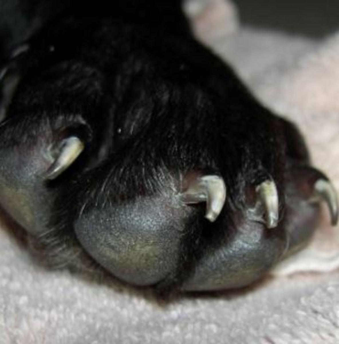 dog-paws