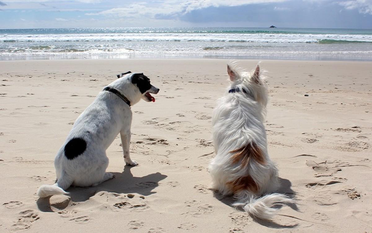 Dogs Menopause