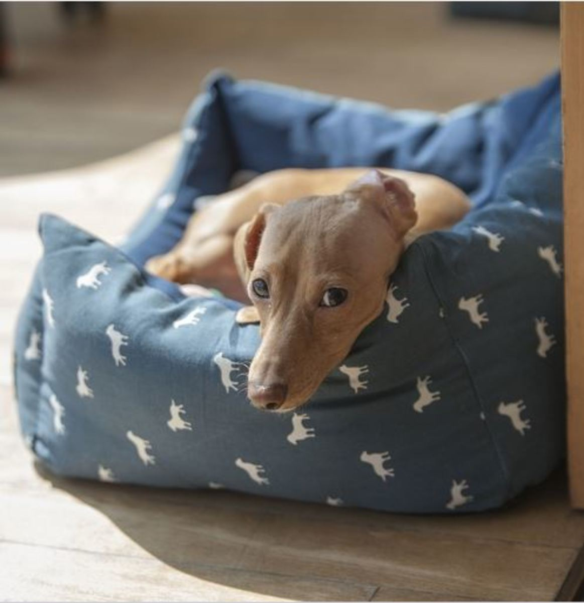 doxie back issues