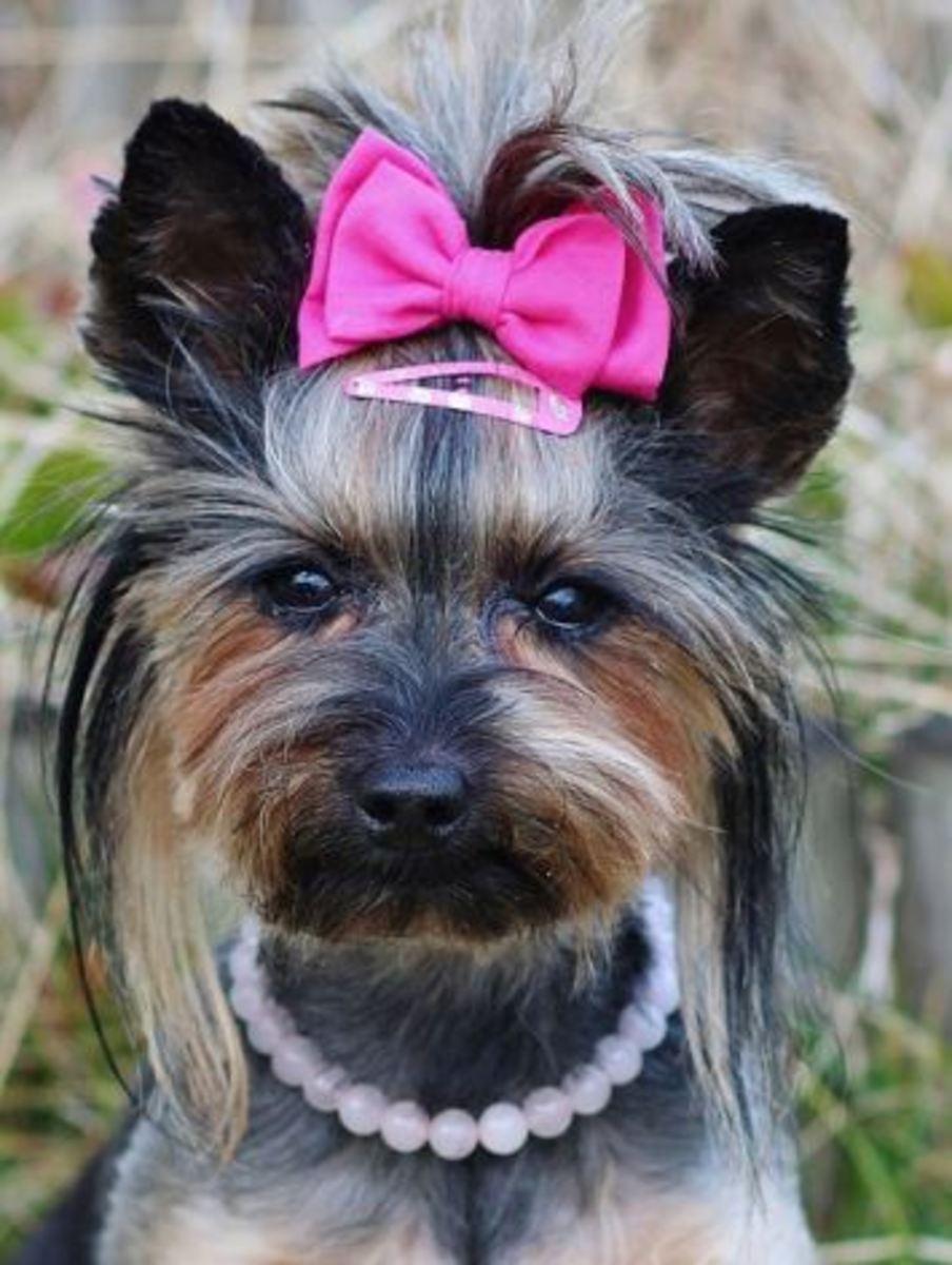 female dog