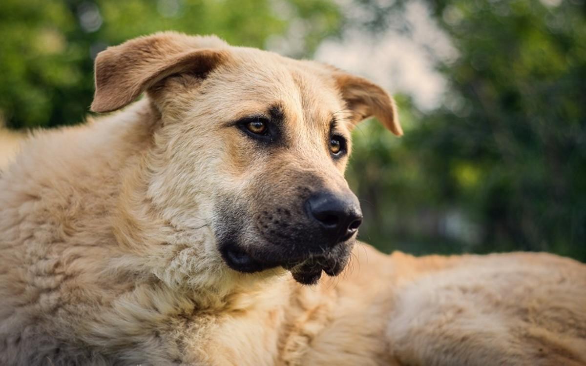Infiltrative Lipomas in Dogs
