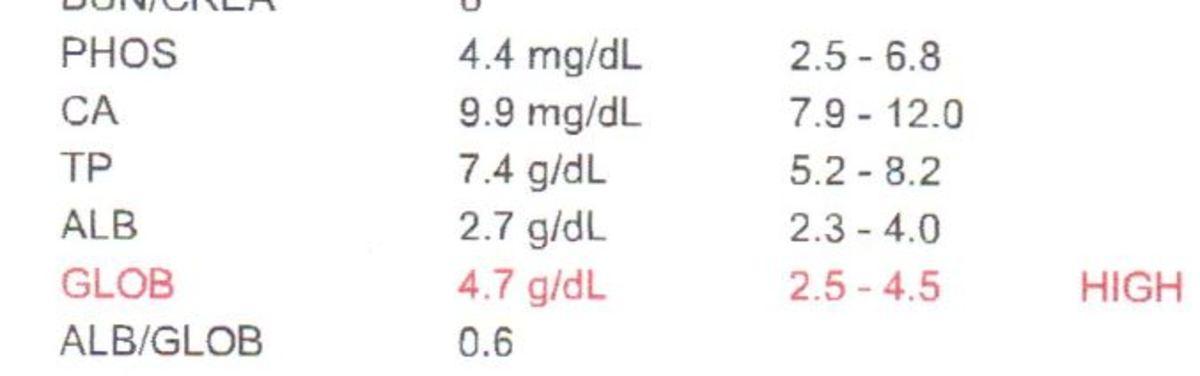 High globulin levels in dogs