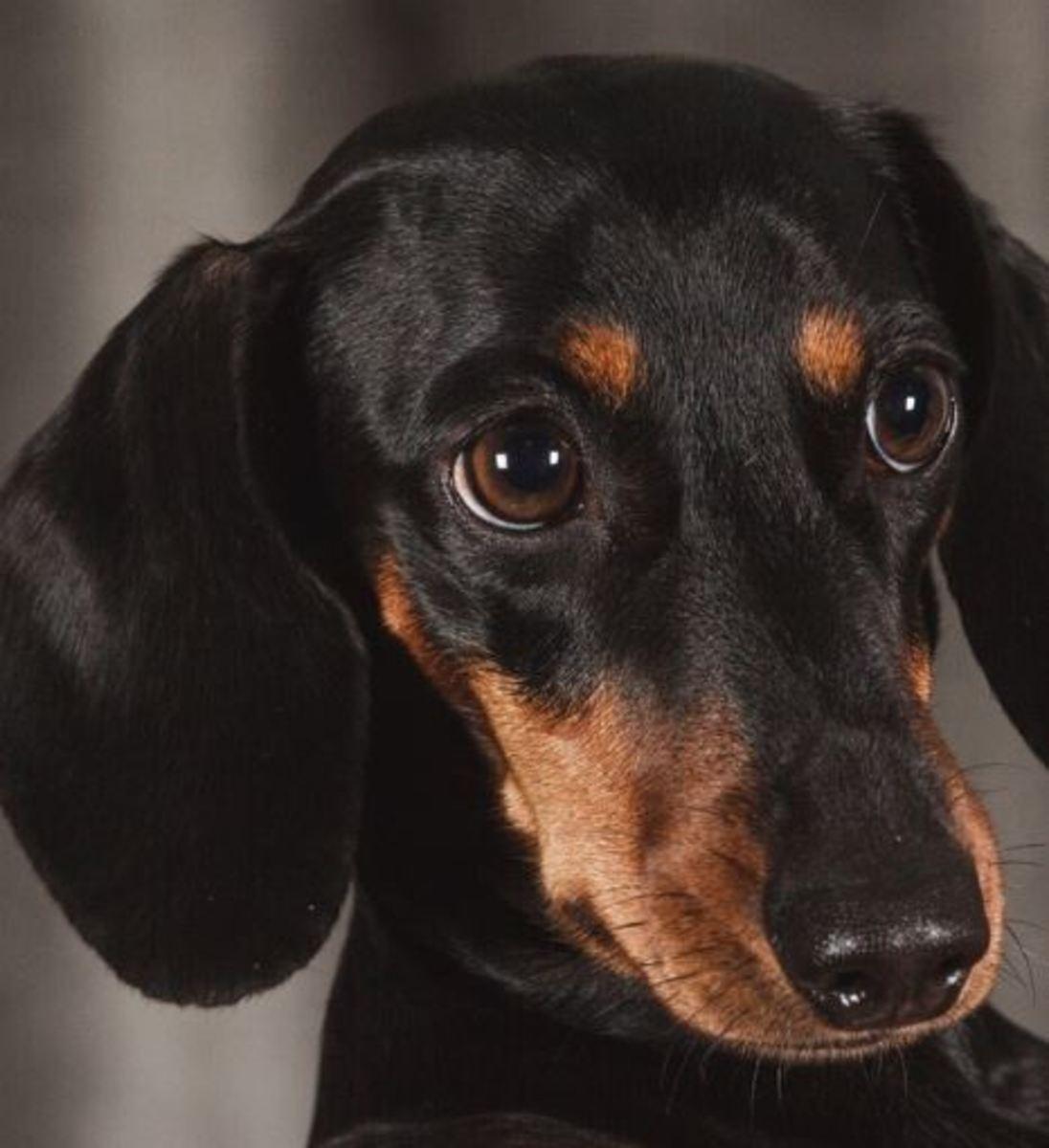Gabapentin for Dog Back Pain