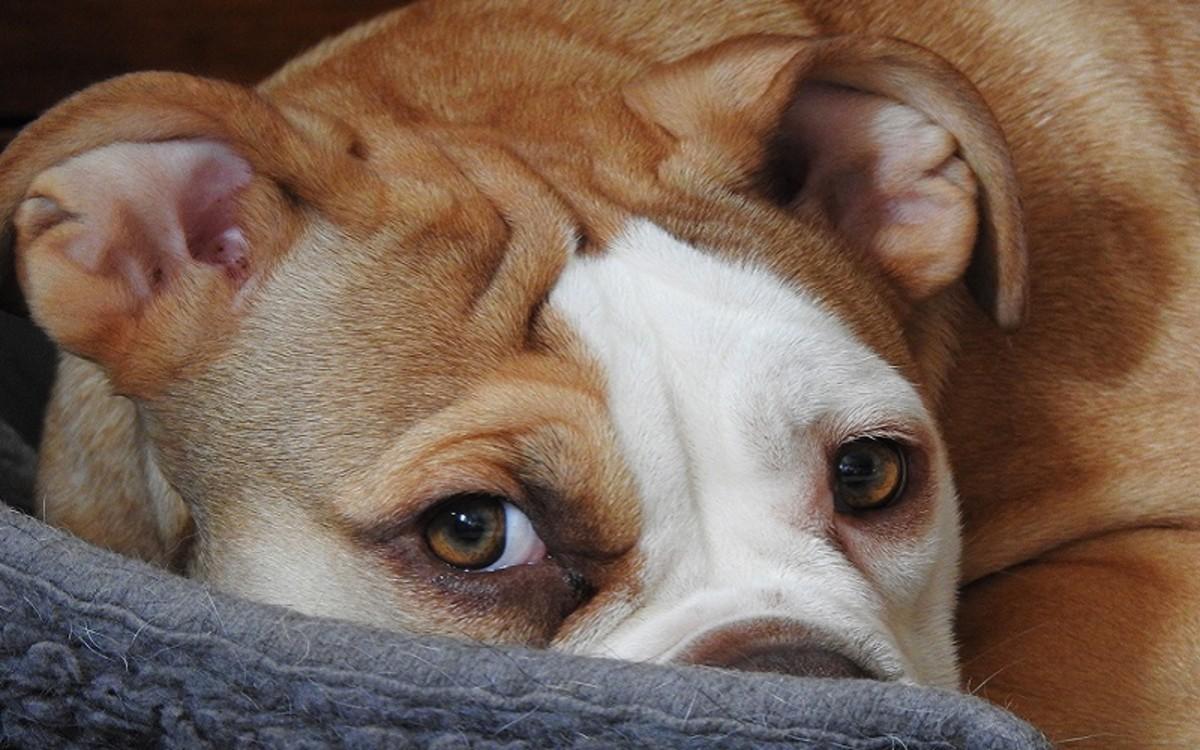 Dog Leg Sprain Versus Fracture
