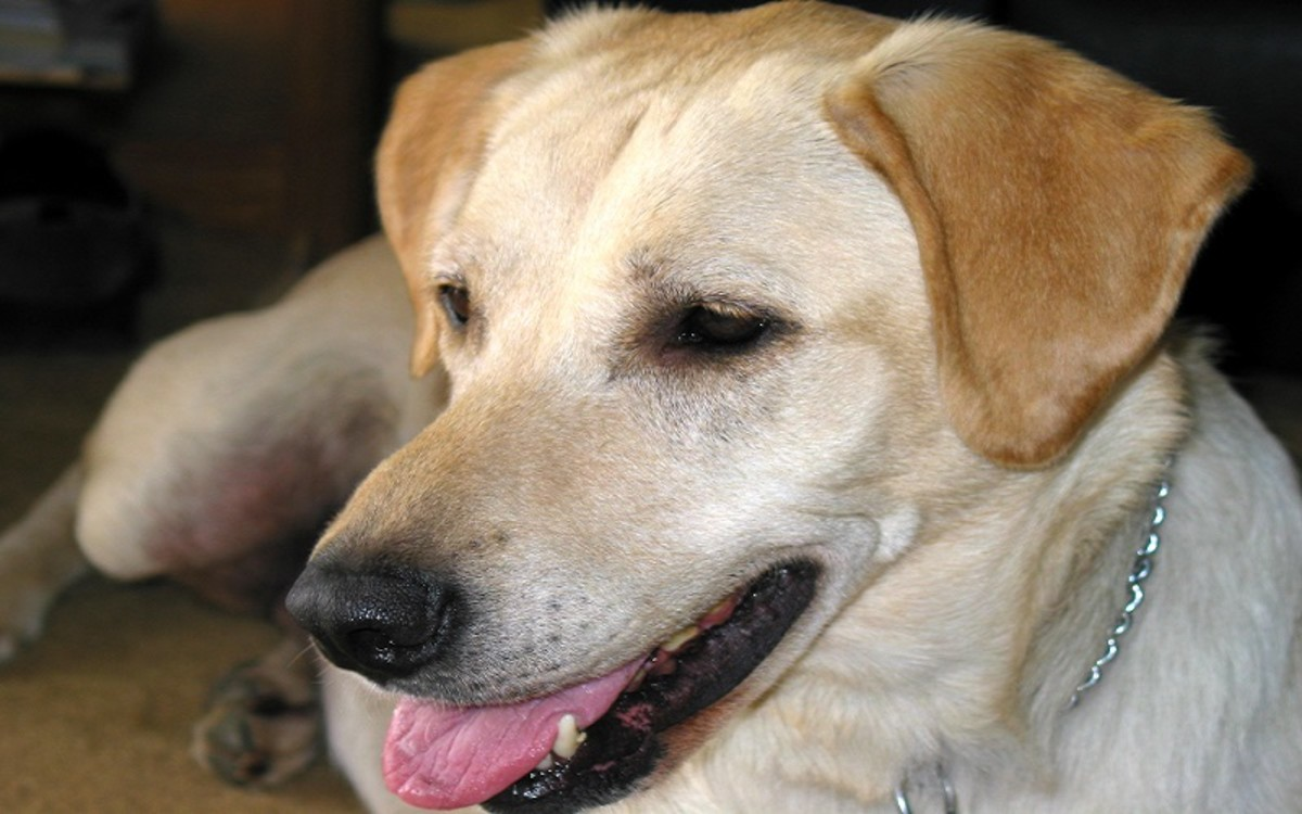 A List of Medications for Dogs With Pancreatitis