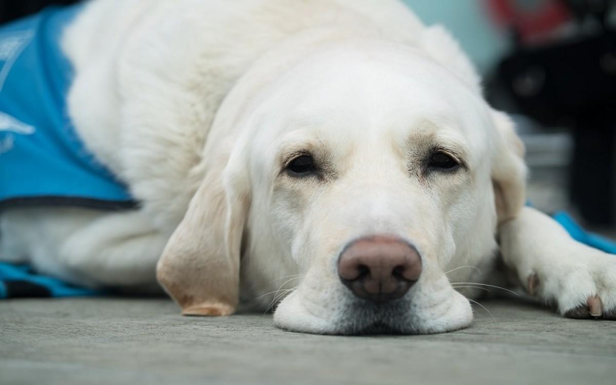 bloodhound wrinkles