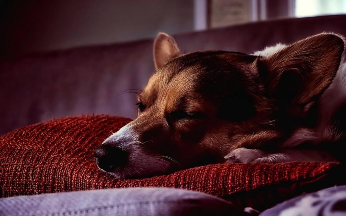 Doxycycline for Dogs