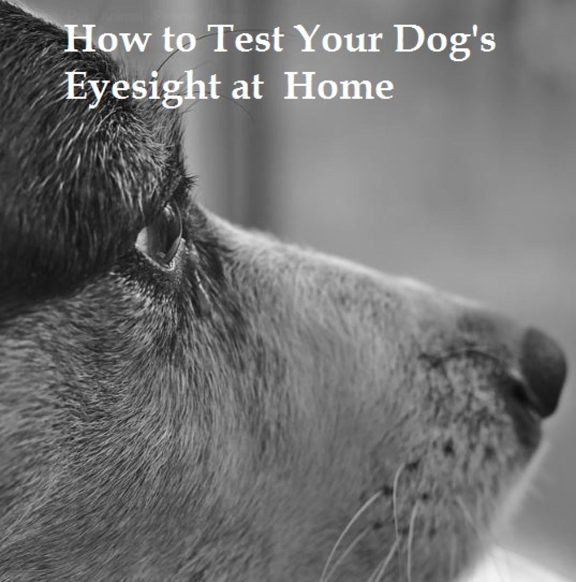 dog eyesight test