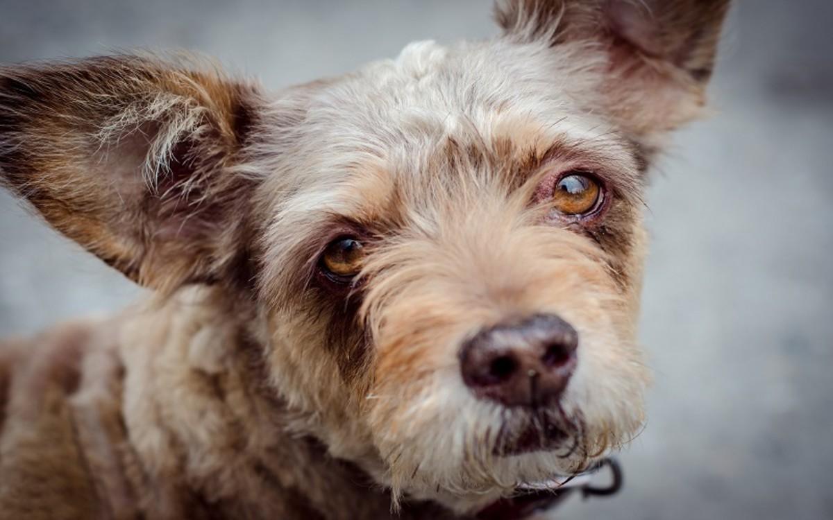 Dog Rabies Vaccines