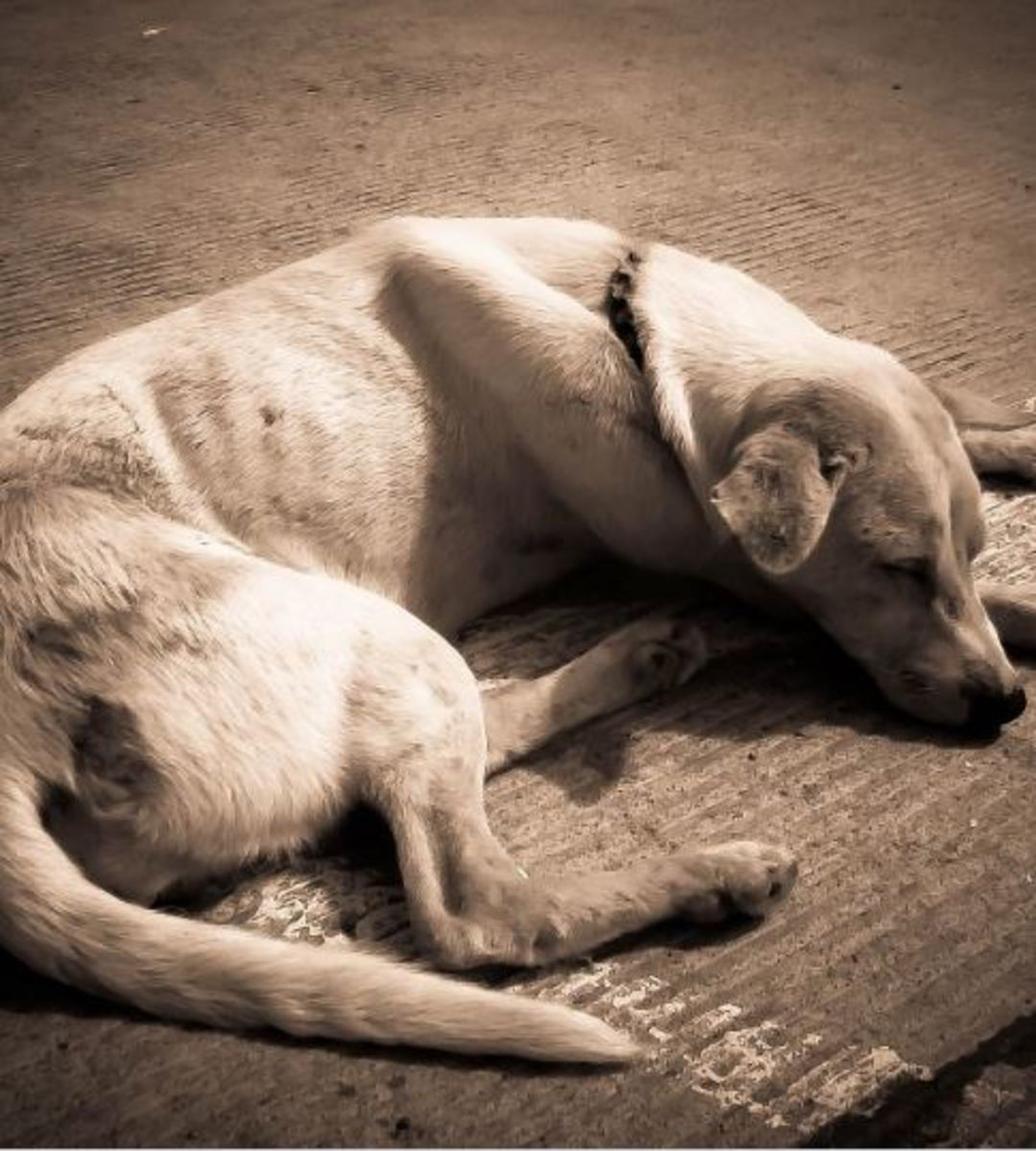 How to tell if a dog is dehydrated?