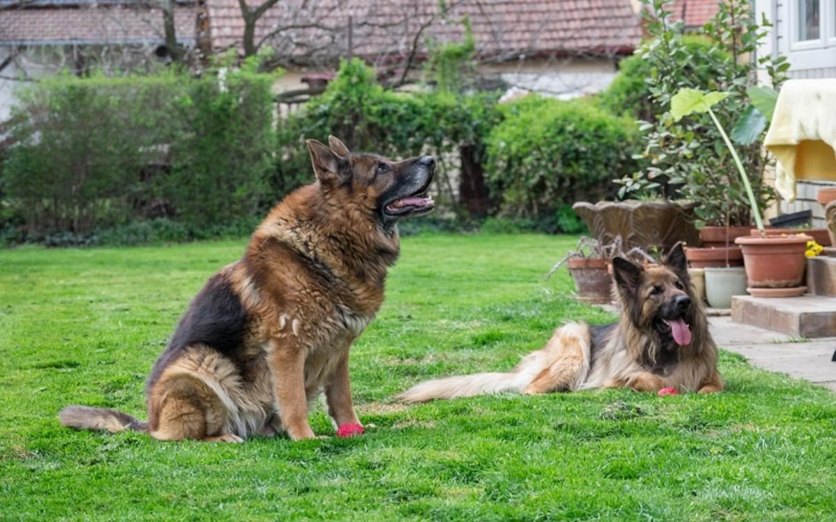 Heartgard Versus Interceptor For Dogs