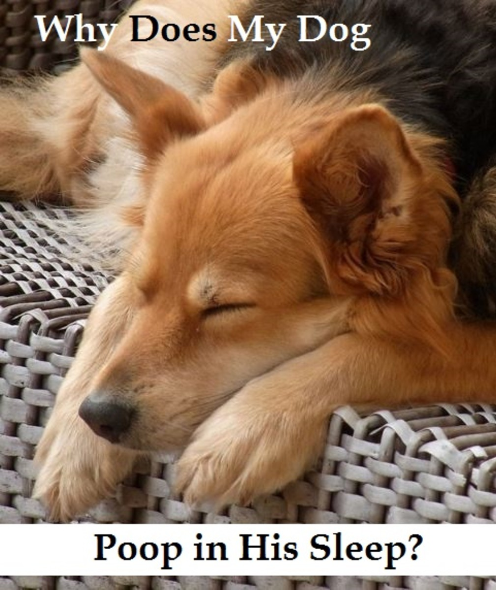 dog poop in sleep