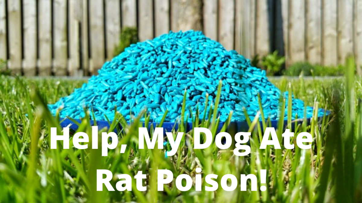 Help, My Dog Ate Rat Poison!