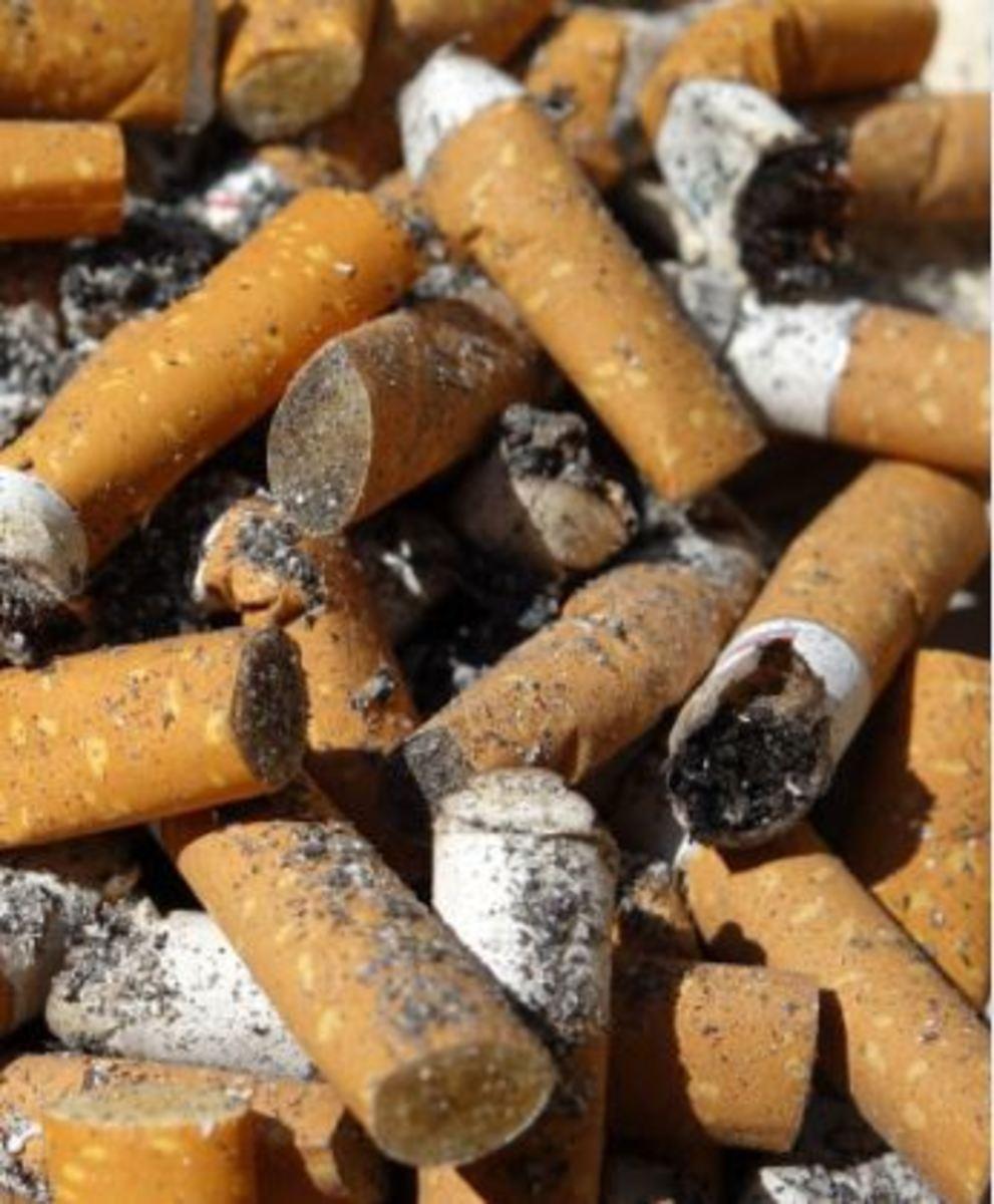 dog cigarette butt