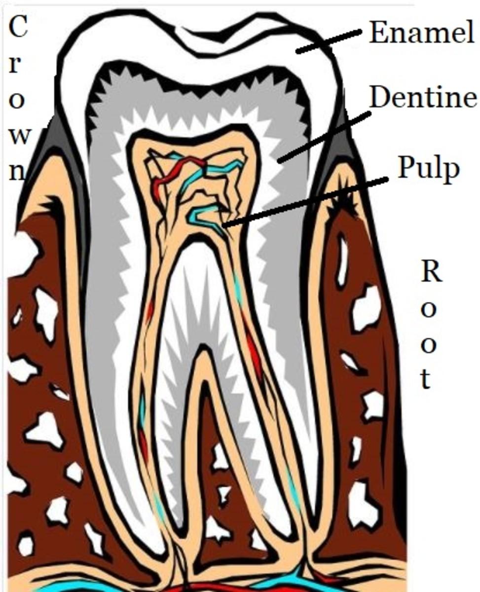 teeth composition