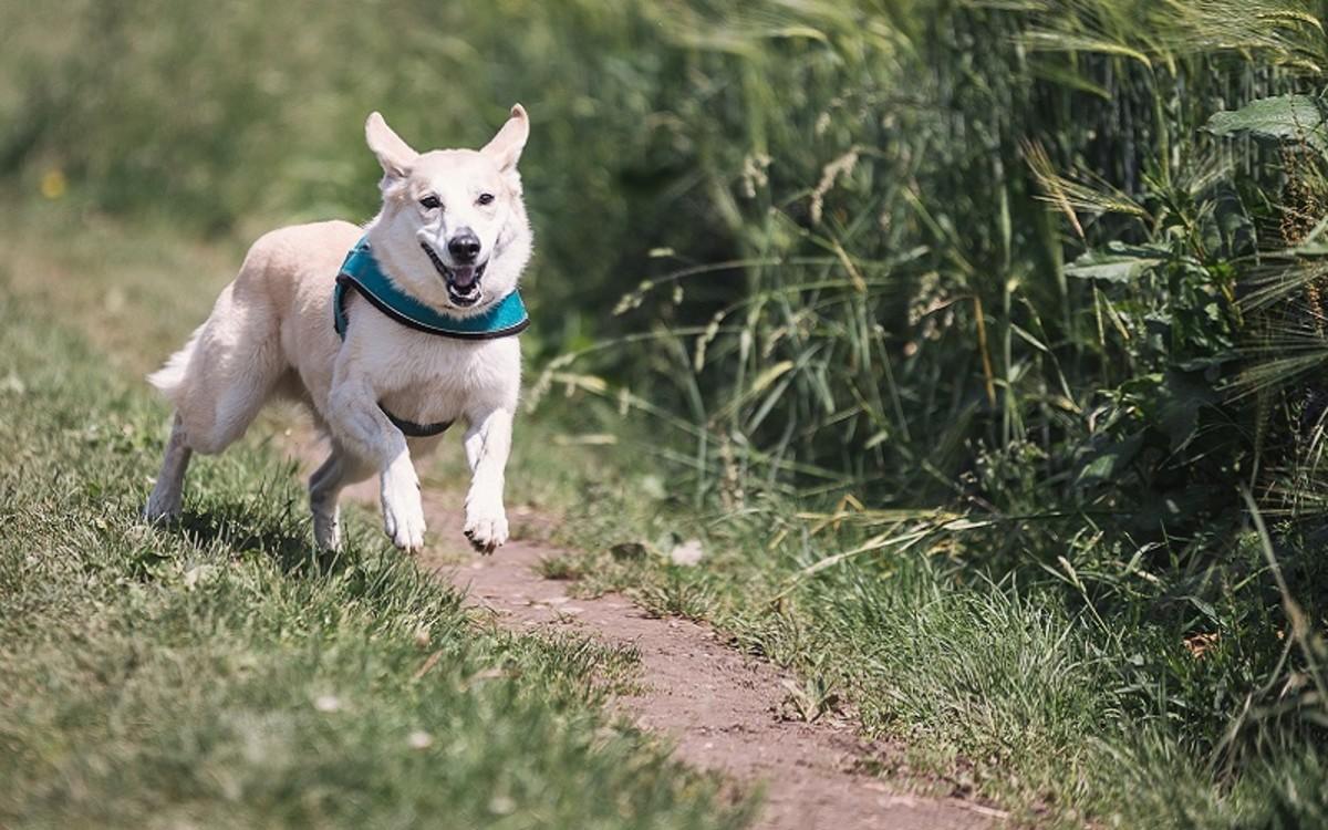 Can Dogs Get Tetanus?