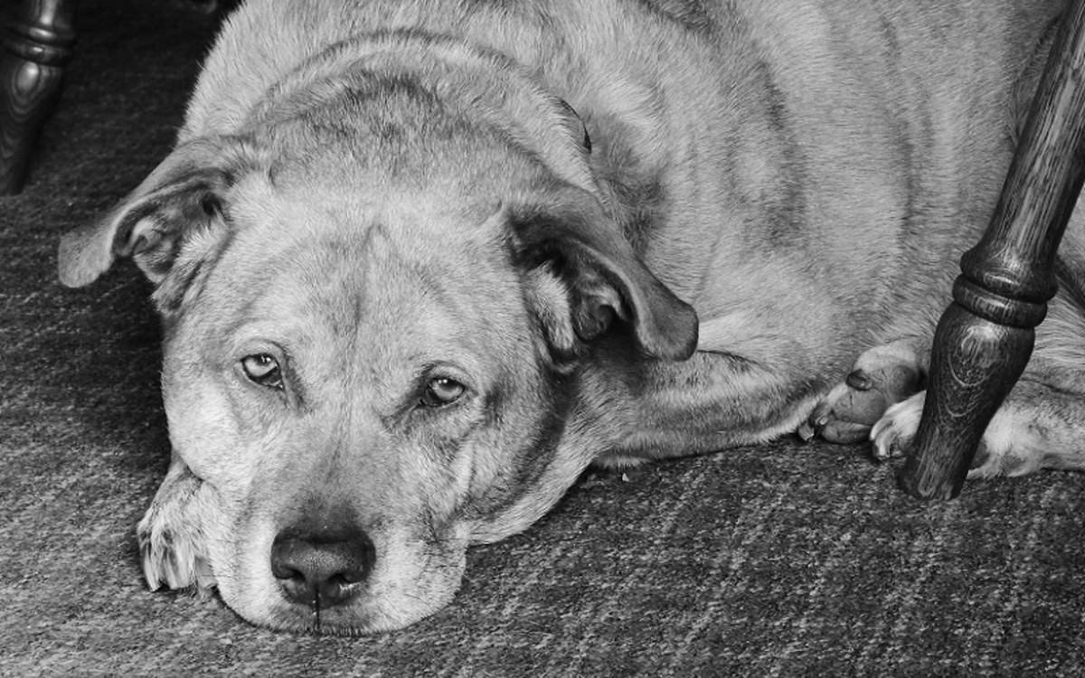Tranquilizers for Dogs