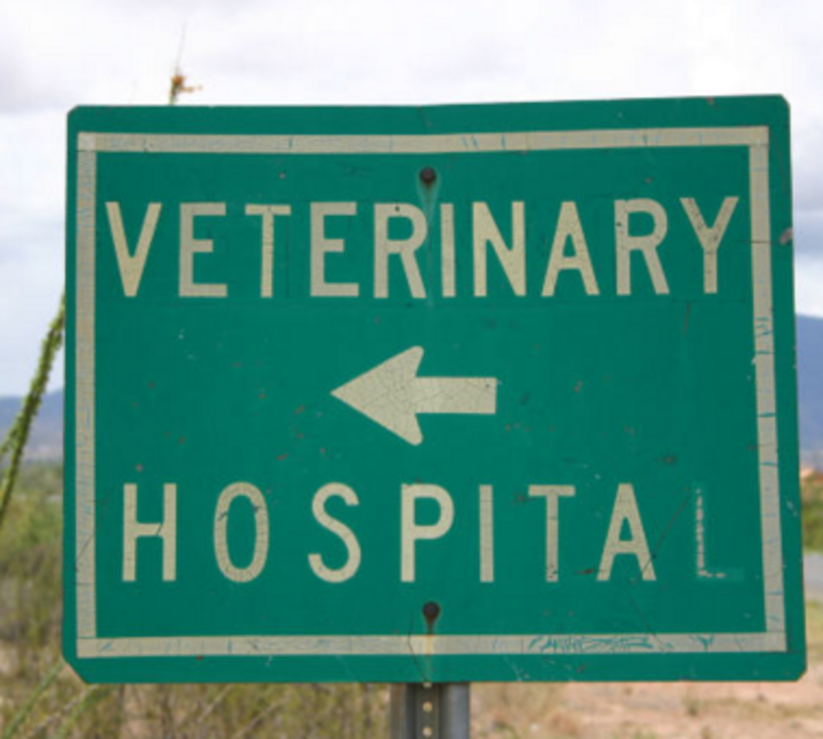 dog pain goes away at the vet